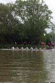 M1Eights2014rowover